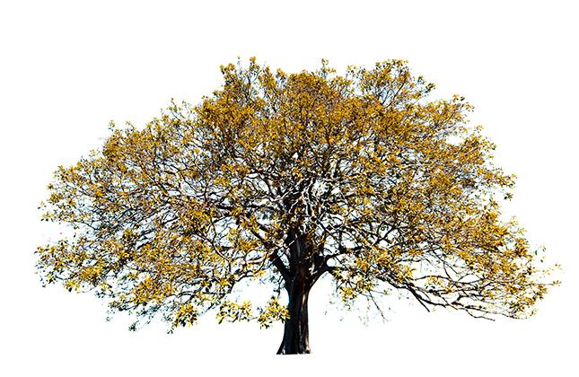 Trees of Life - Milan Krajnc
