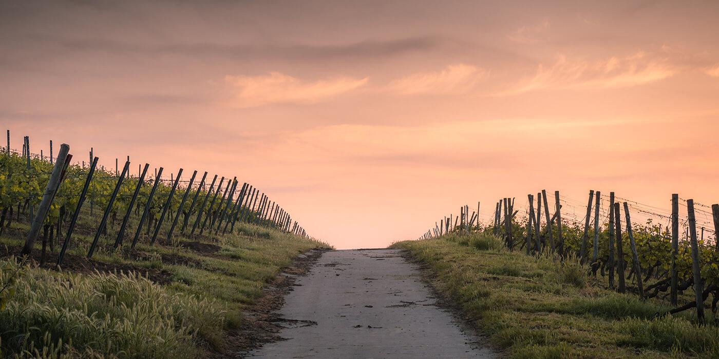 The path has begun… Back to yourself! Milan Krajnc